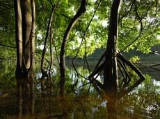 Tumucumaque é o maior Parque Nacional do Brasil e uma das maiores áreas de floresta tropical protegidas do mundo