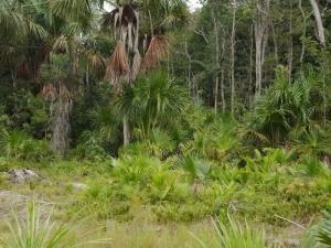 Amazônia. Foto: Ministério do Turismo